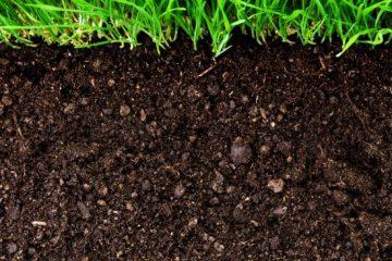 خاک هوموسی